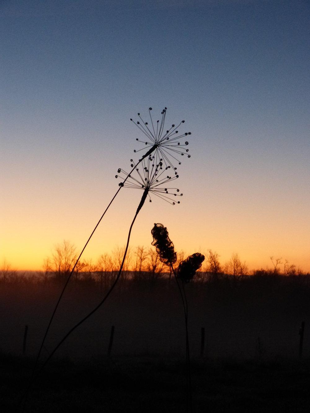 matin et fleur.JPG