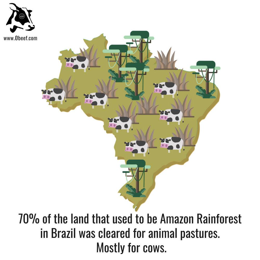 8. Rainforest.jpg