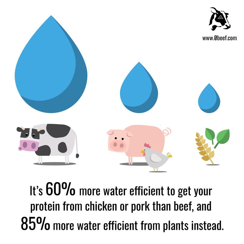 14. Water Efficiency.jpg