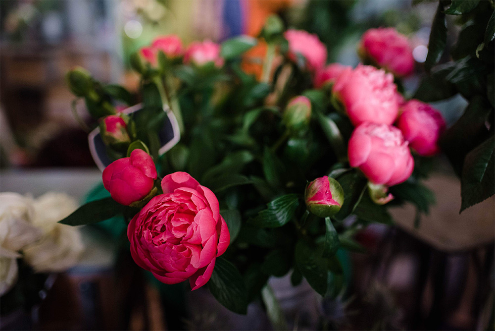 fresh flowers -