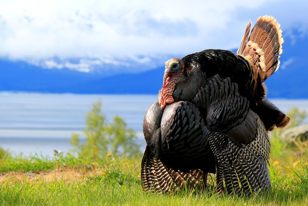Turkey Hunting loads