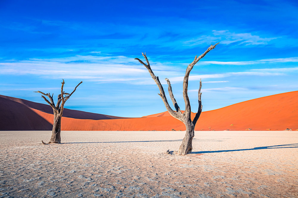 Dead Trees at Dead Vlei I