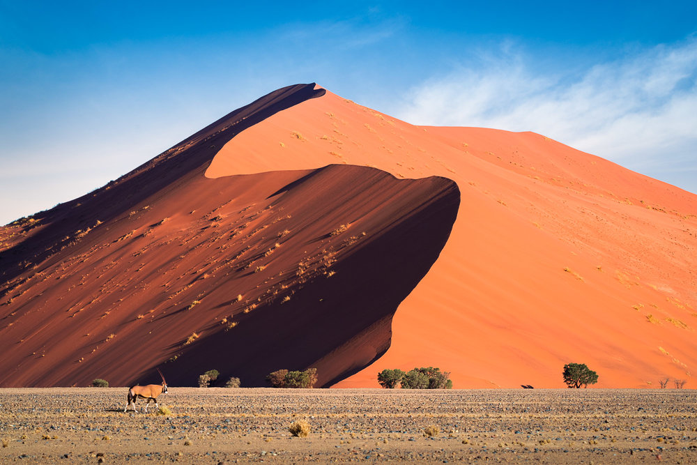 Oryx And Red Dune