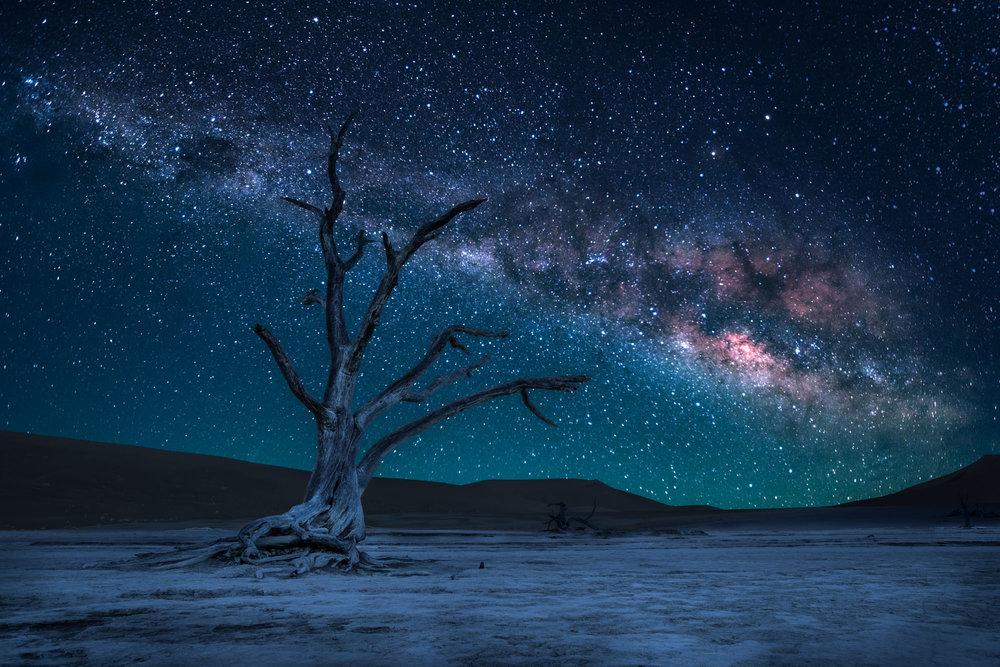 Dead Tree At Dead Vlei at Night