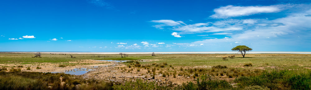 Etosha Pan Panoramic View