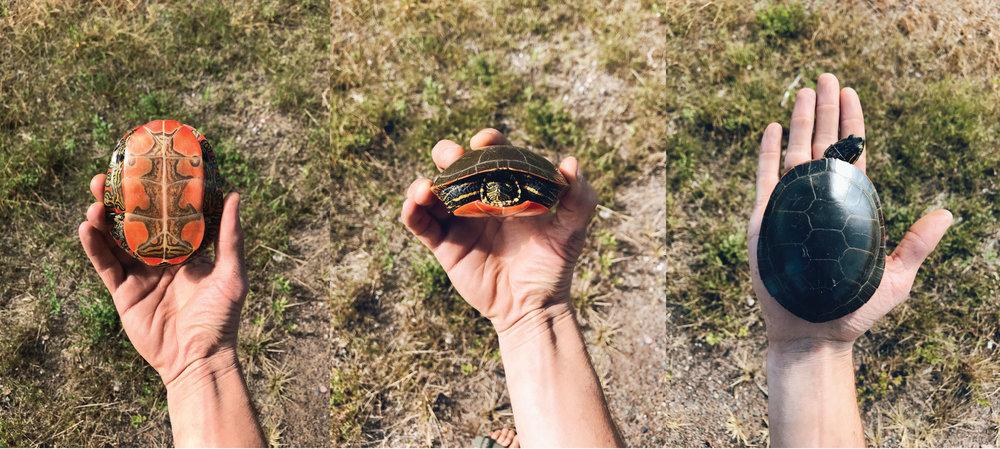 Turtles-.jpg