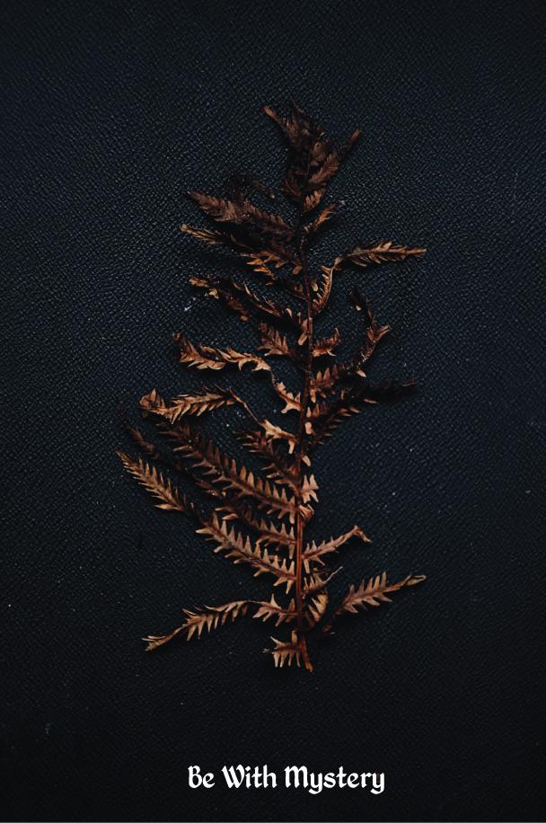 Mystery---The-Dreams-of-Trees.jpg