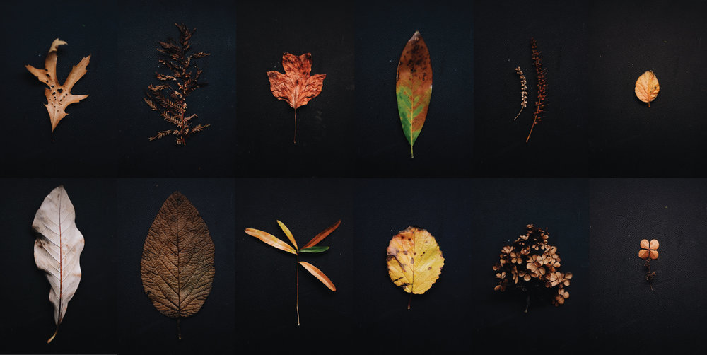The-Dreams-of-Trees-Part-2-v2.jpg
