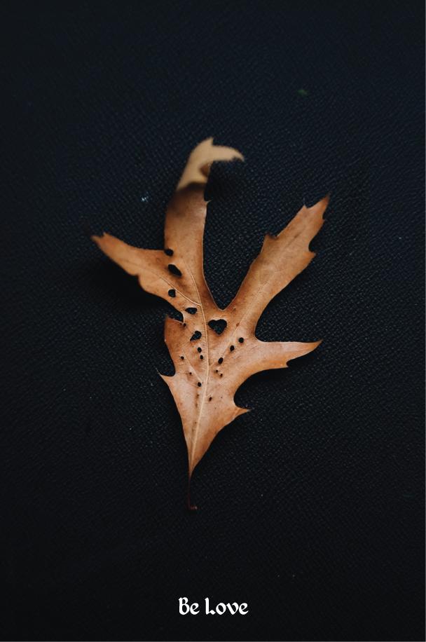 Love---The-Dreams-of-Trees.jpg