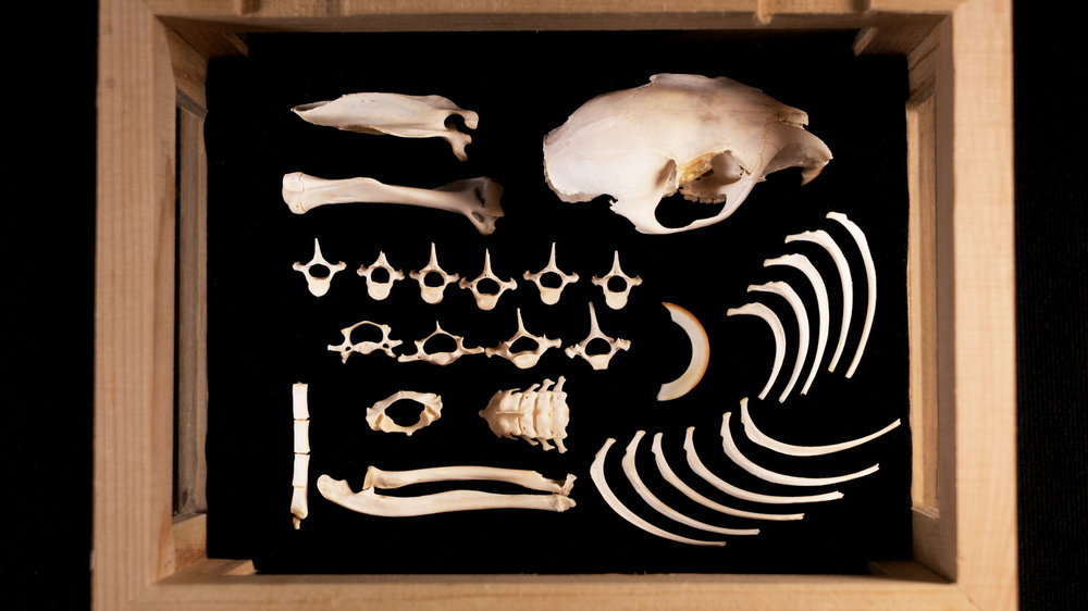 Rat Bones.jpg