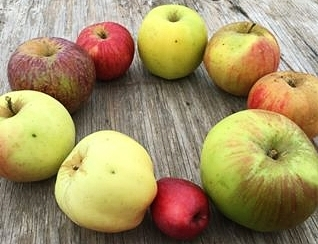 Heirloom Apple Club2019 - So many apples, so much fun