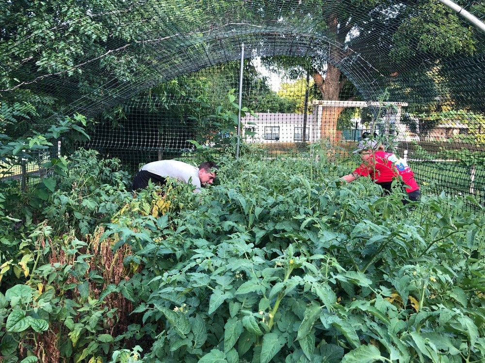 Kitchen staff working in the garden