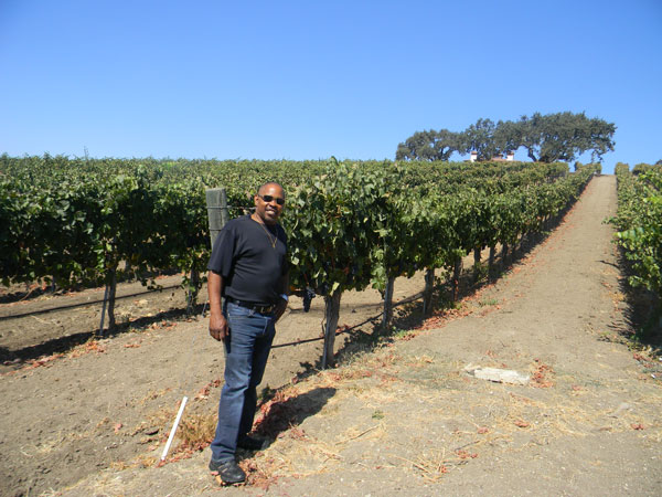 Francis in the vines