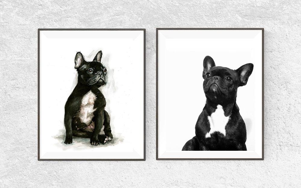 Dave Bond's French Bulldog giclée print