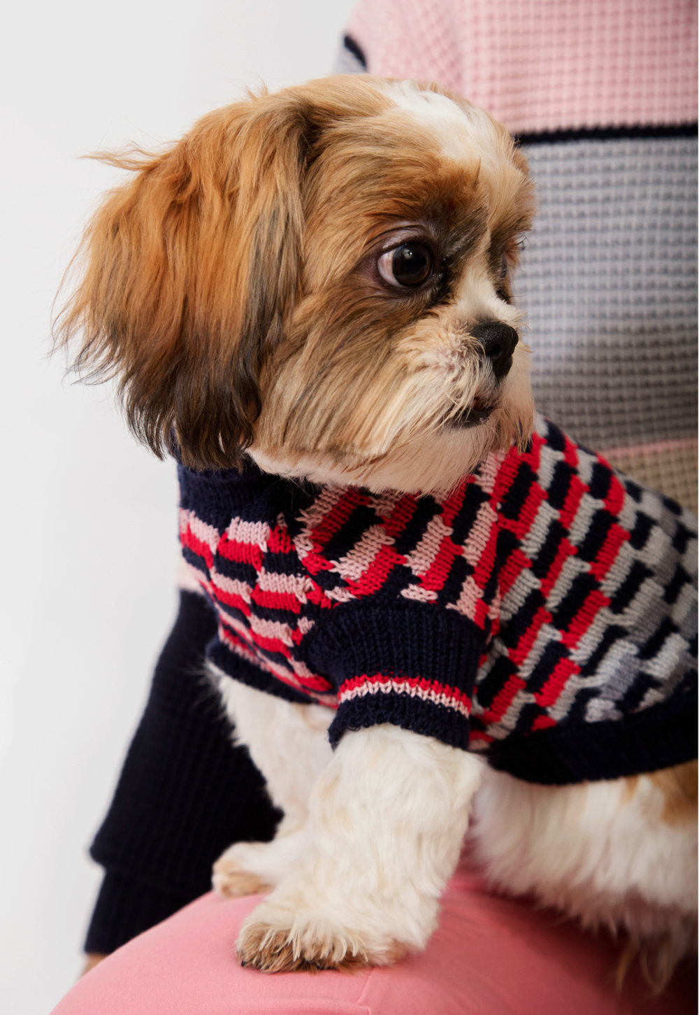DOGWEAR COLLECTION MADE IN UK