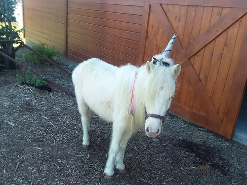 unicorn-birthday-party-obloy-events-merritt-island-florida