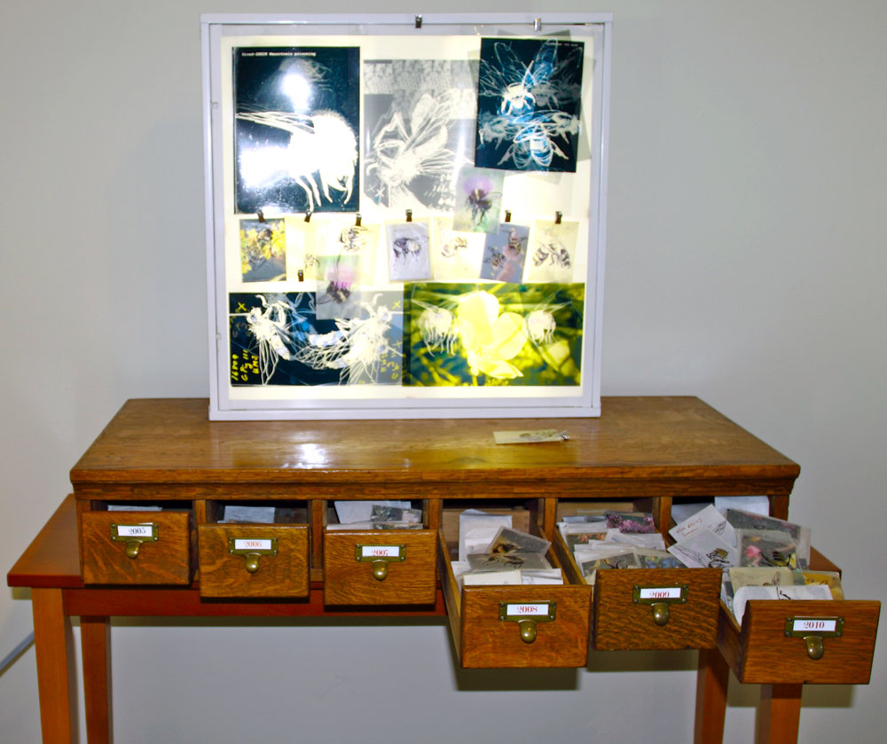 Vanishing Bees   Installation  slide sleeves, ink, light box and catalogue drawers  2010