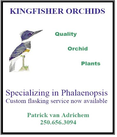 Kingfisher Orchids - www.kingfisherorchids.ca615 Cromar Rd, North Saanich, British ColumbiaBoutique breeder of quality Phalaenopsis Orchids in Canada.