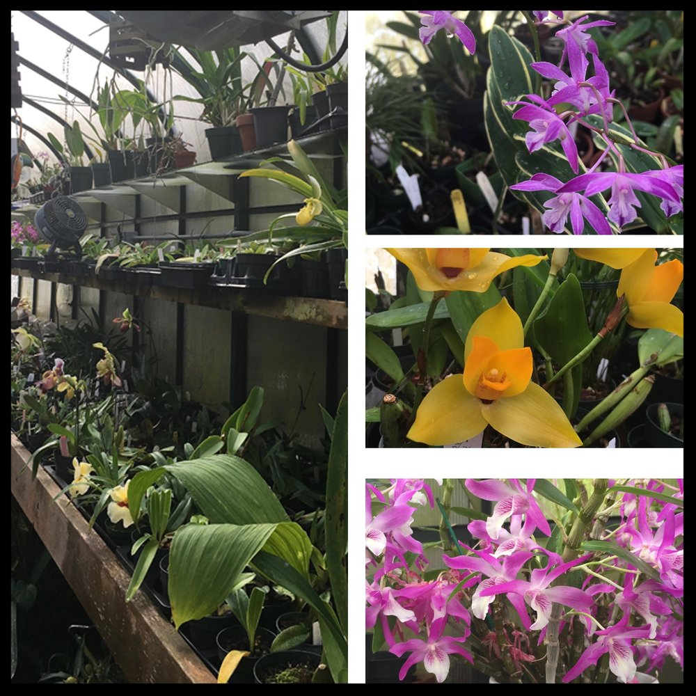 Greenhouse Visits - Visit some of our members' amazing greenhouses and other grow spaces, during our summer open houses.Learn what conditions your favourite orchids need in order to thrive and bloom!