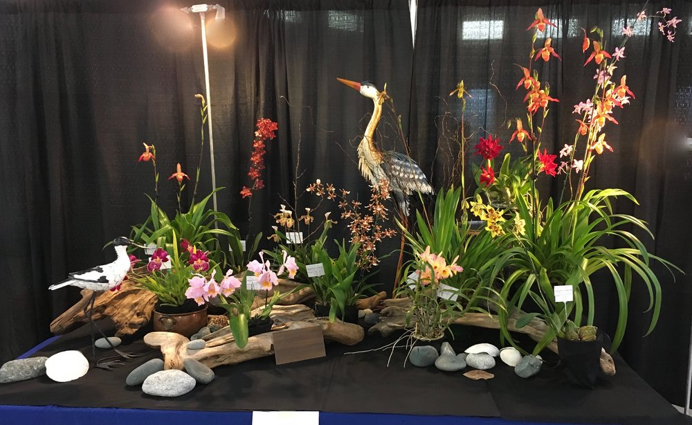 2018 Orchid Show and Sale - Display by Poul Hansen