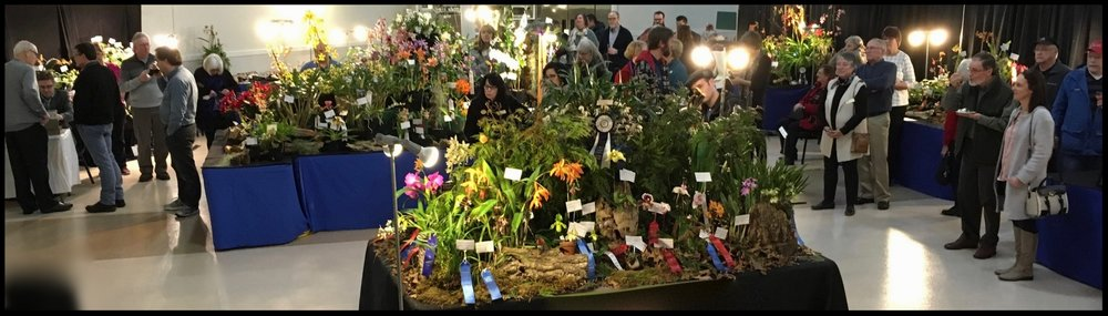 2018 Orchid Show Preview and Awards Night - March 3