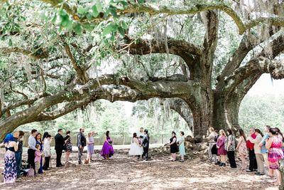 Tree of Life - image found via google