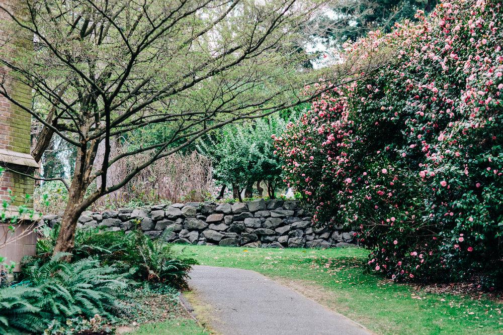 UW-Cherry-Blossom-2.jpg