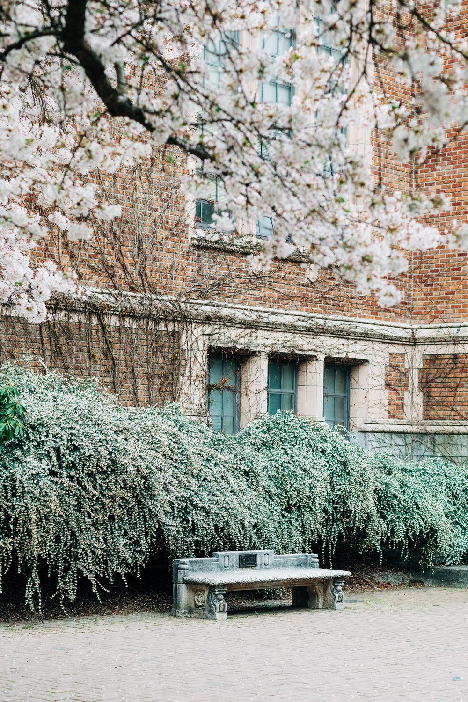 UW-Cherry-Blossom-6.jpg