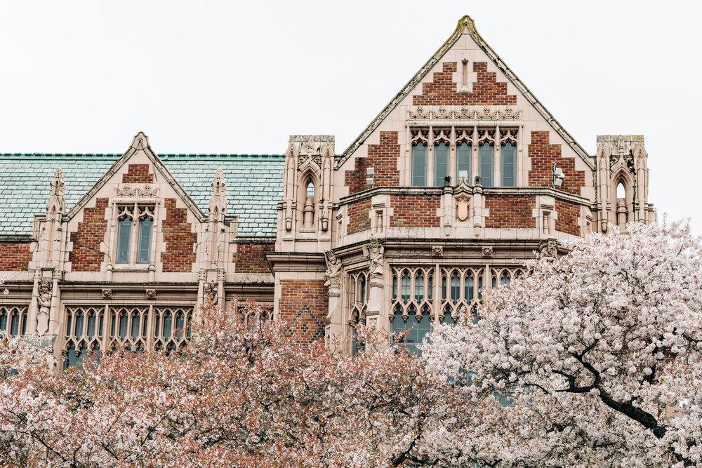 UW-Cherry-Blossom-10.jpg