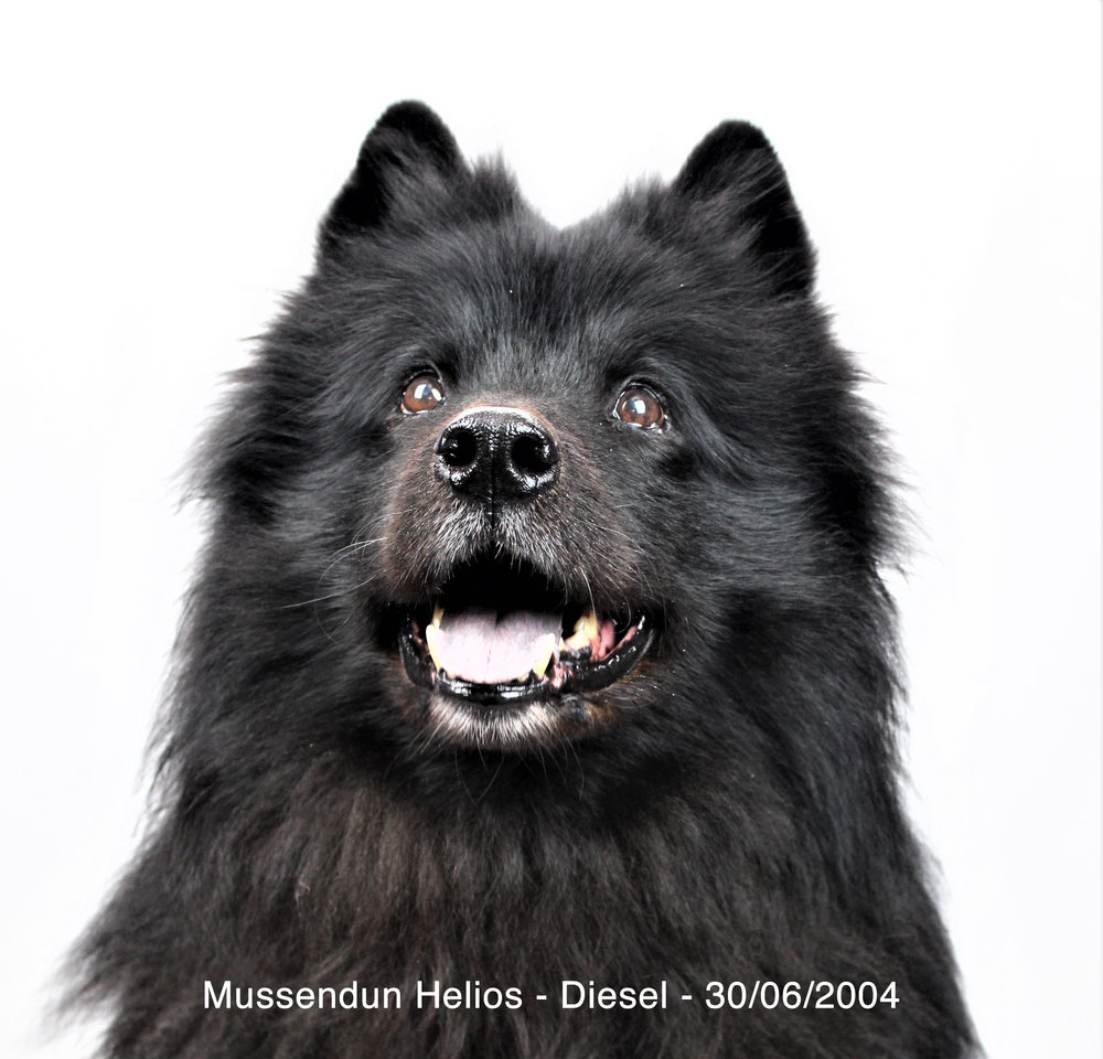 Diesel_Mussendun Helios30-06-2004_A.jpg