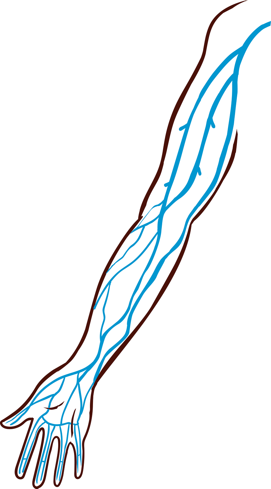 The veins of the arm are visualized.  ©BigStockPhoto