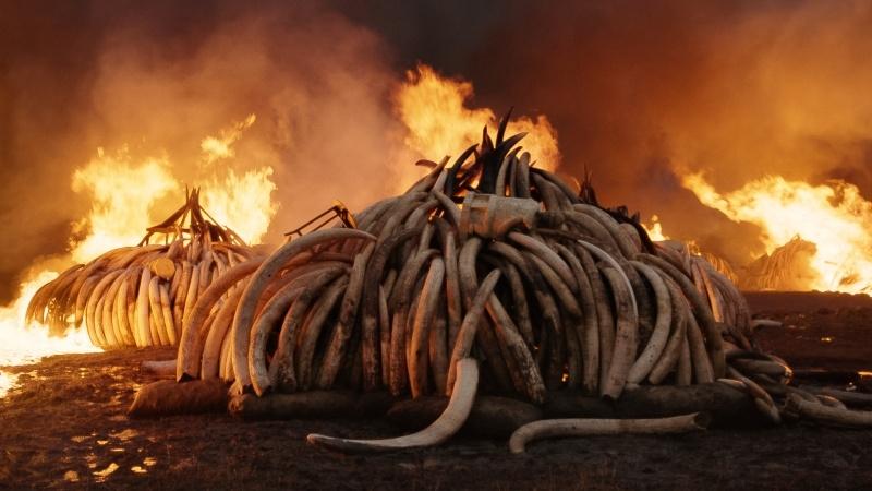 anthropocene_film_still_tusk_burn_0.jpg