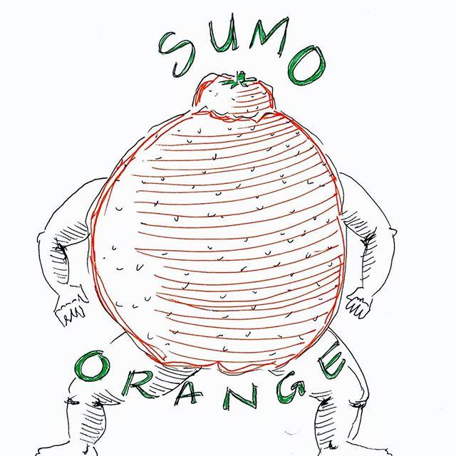 #sumoorange 🍊🍊🍊 #juliadoodle #mujipen