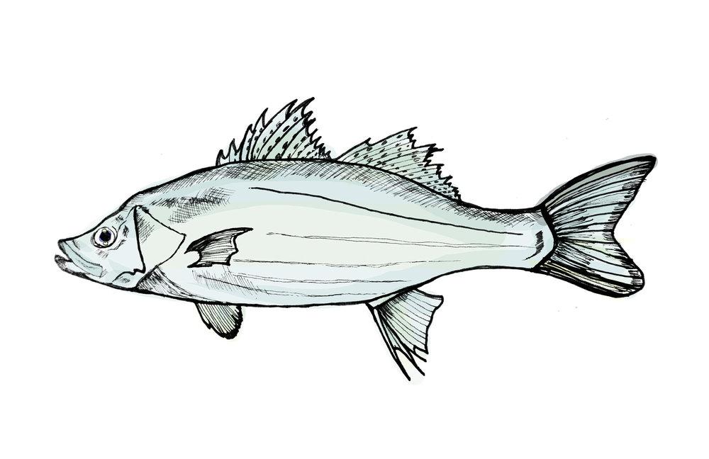 fish-color.jpg