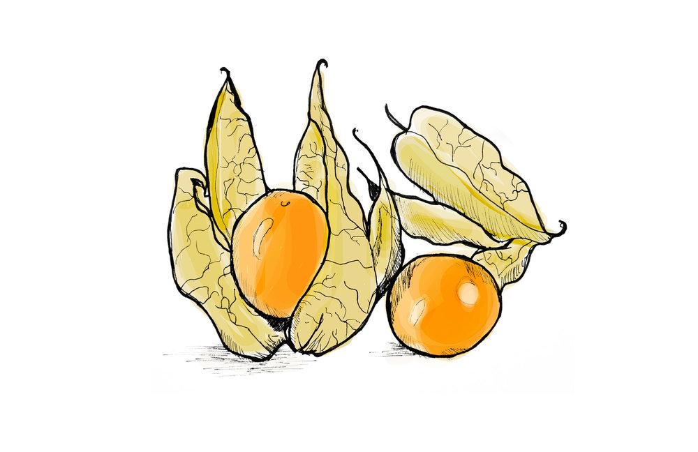 golden-berry.jpg