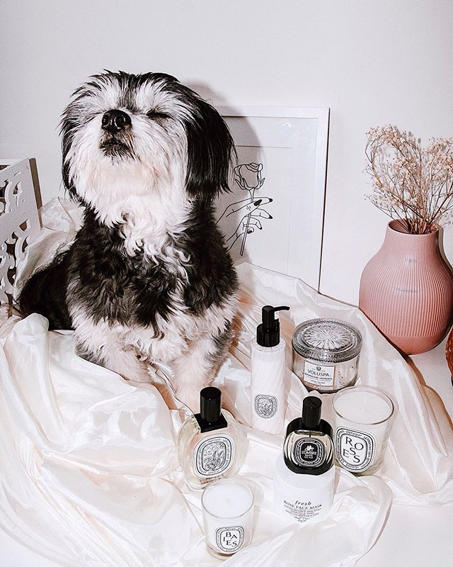 "Welcome to the second edition of my #pissedoffpuppyreviews! Complimentary from diptyque Paris, Boris was gifted their L'Ombre dans l'Eau eau de parfum & Baies candle! 😍 He's a huge diptyque nerd so as you can see in this photo, he's been ecstatically sniffing these products. 😂 I've never seen him more happy or smug... . . Despite rumors that he is living, breathing, serial-killing teddy bear - Boris is, in fact, a lovable albeit very unstable DOG, so he already has an incredible sniffer. But I was a perfumer in my previous career and so Boris has trained his nose to be even MORE discerning than it was before. So discerning, in fact, that he looks at me with disgust - like I've committed a crime - every single time he smells a fart (it wasn't me, I swear 😇). So if you're not quite ready to leave your future perfume purchases in his trusty paws, hopefully this review will help. Swipe through for paw photos! . . Boris' favorite perfume notes are: Bunny poop. Goose poop. Lettuce spines. Frankincense kernels. Predigested cabbage roses. Lavender stalks. Peppermint paws. Earwax that smells like corn chips. Salmon Skin. Syrupy benzoin. Hinoki branches. Boo-berries. Bacon. . . Boris' most hated perfume notes: Bunny breath. Human breath. Boris' breath (rotting sardines). The smell of the sweet lady neighbor who he wants to eat. He also HATES anything woody with a vengeance. So you can imagine how difficult it is to find the proper puppy perfume for this reincarnated Ron Swanson doggie. . . Boris LOVES @diptyque... and so does his mom but he doesn't share ANY of his products with me. 😂 In fact, I'm pretty sure he's been ordering his own diptyque collection behind my back cause he keeps getting packages addressed to him and opening them in the other room. . . So when #diptyqueParisgiftedme this gorgeous duo I knew it had this doggie's name written all over it. . . In Boris' own words... ""I borking loves this pawfume. It bittew and cwispy and fruitsy and floral and lettuce-y 🥬. I loves lettuce"" . . Continued in comments... . . @diptyque #diptyque #legendedunord"