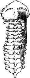 figure 7a.jpg