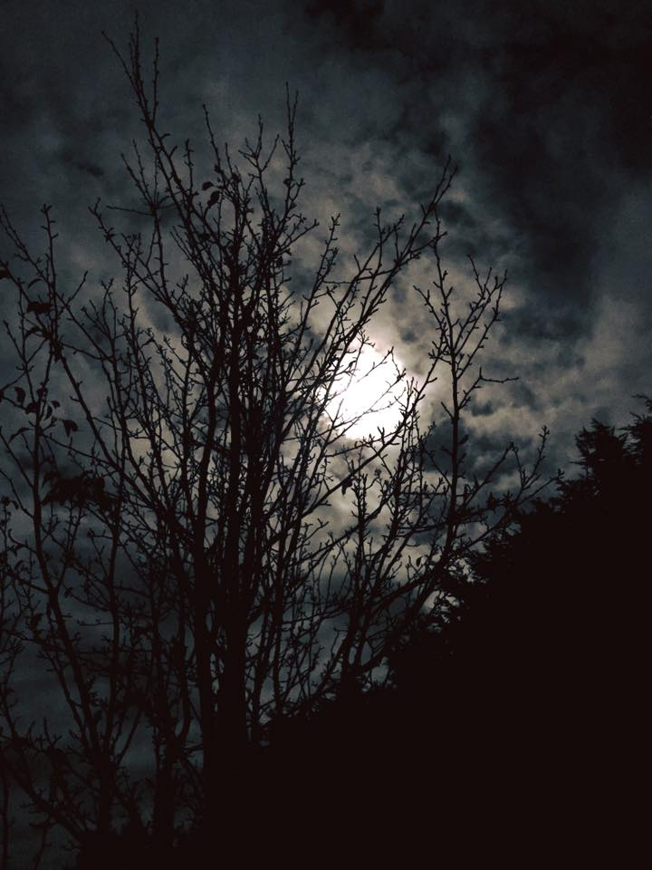 Moon and trees.jpg