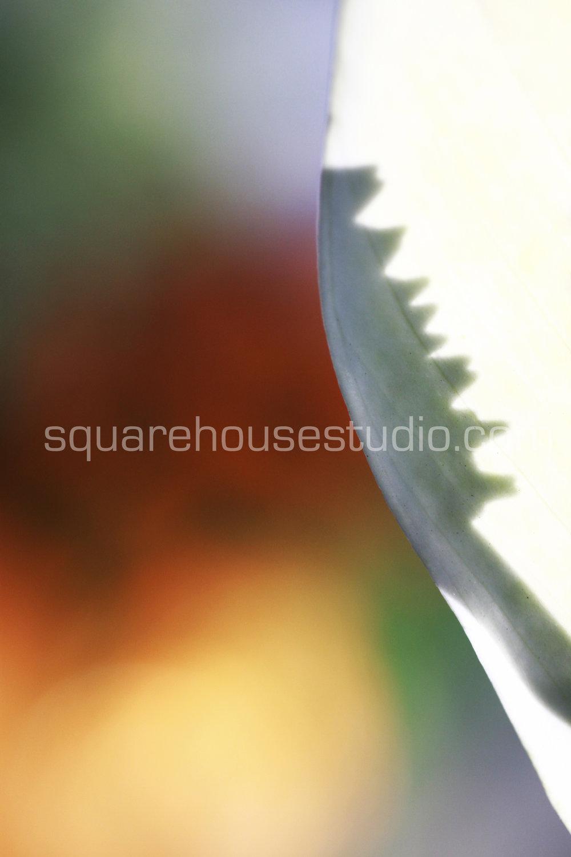 "Seductive Shadow , 8"" x 10,"" $50, Unframed photo"