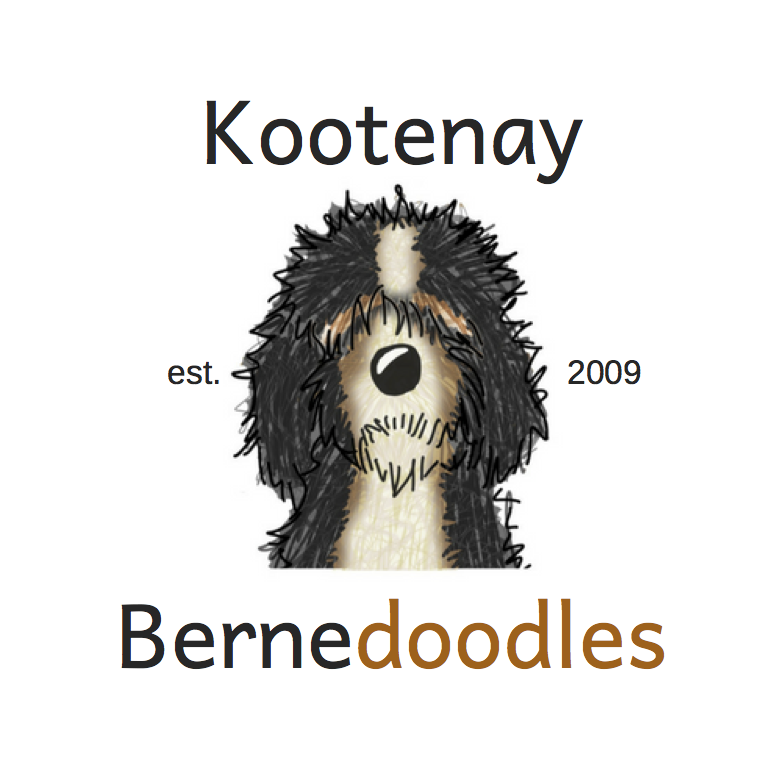 Kootenay Bernedoodles