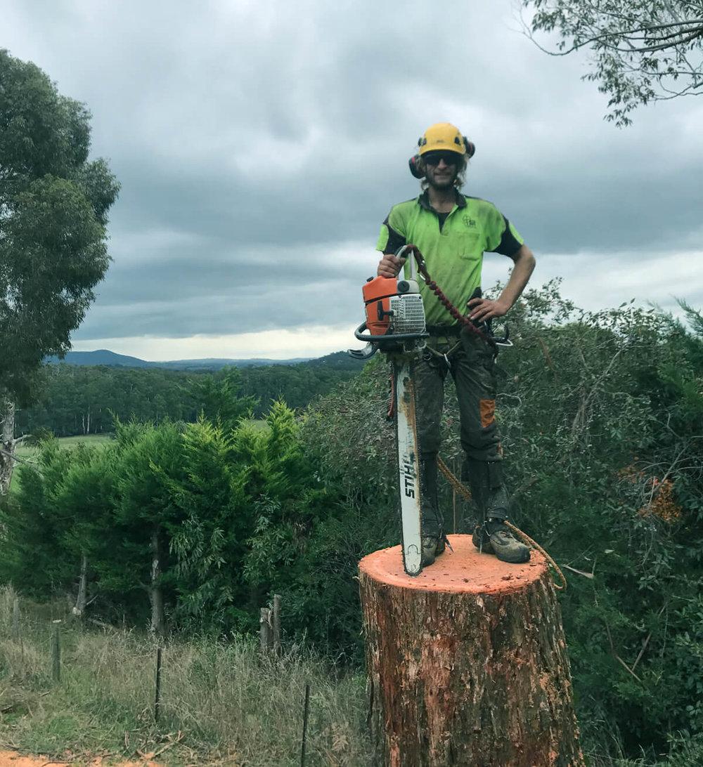 TLC-Trees-Stump-Removal.jpg