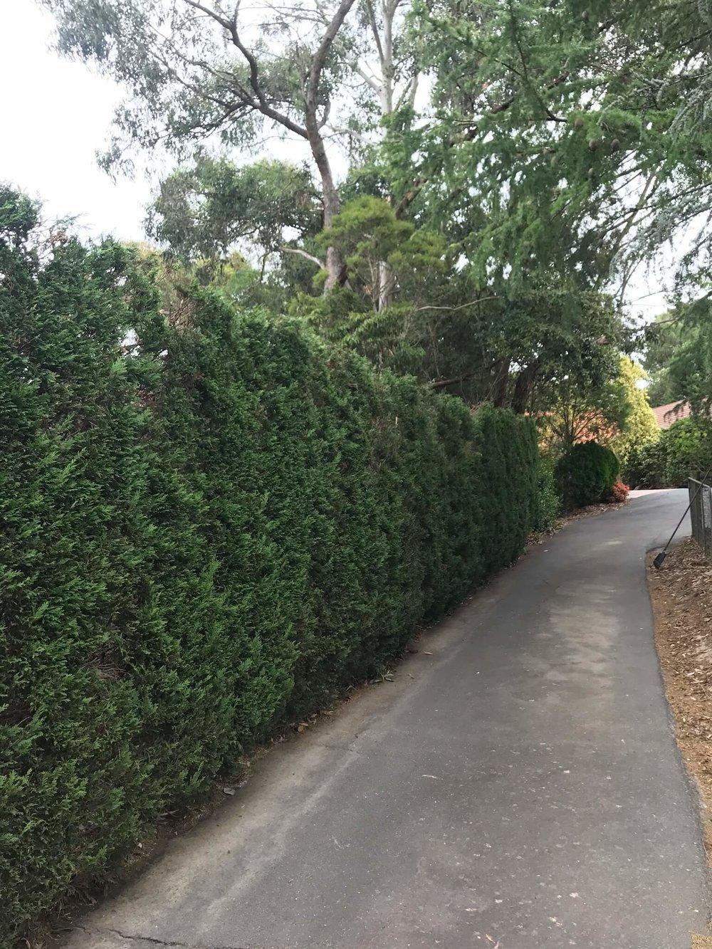 Yoeman's crt, Park orchards-6.jpg
