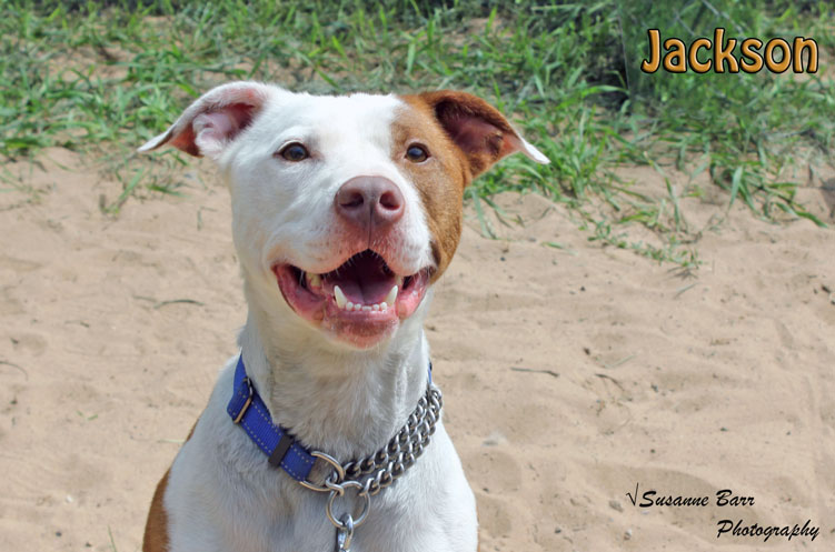 Jackson-5.jpg