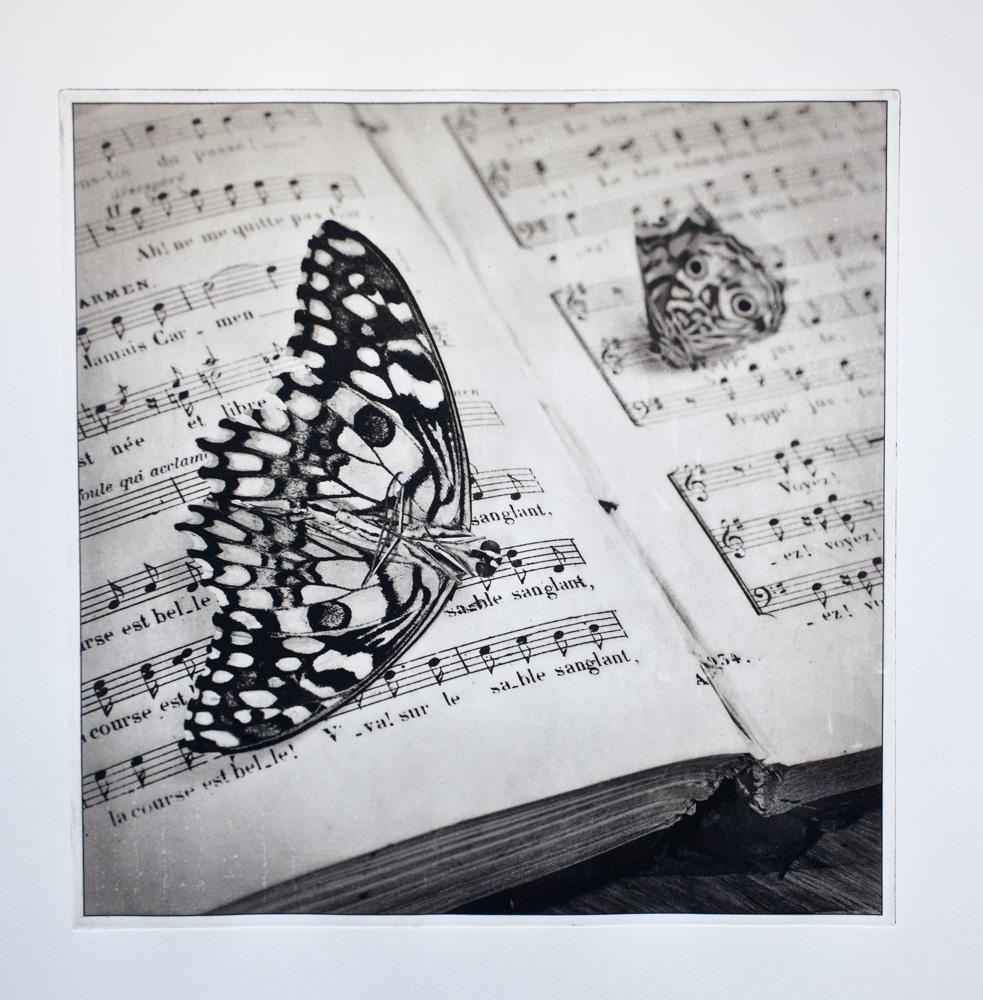 Music Moth