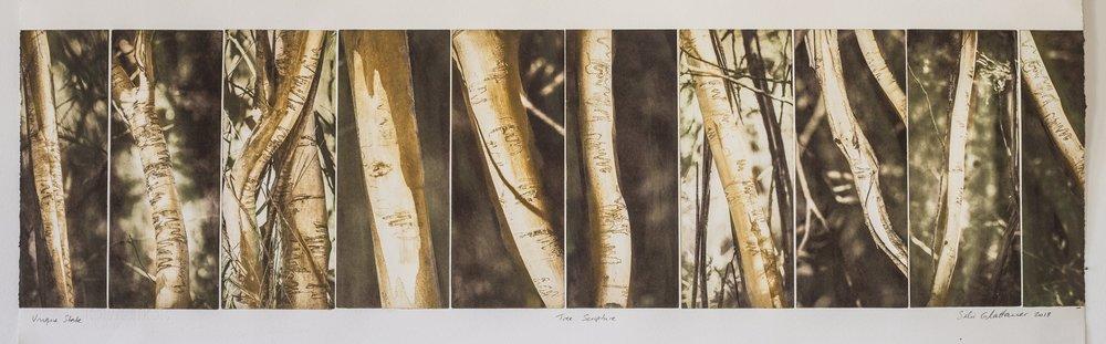 Tree Language