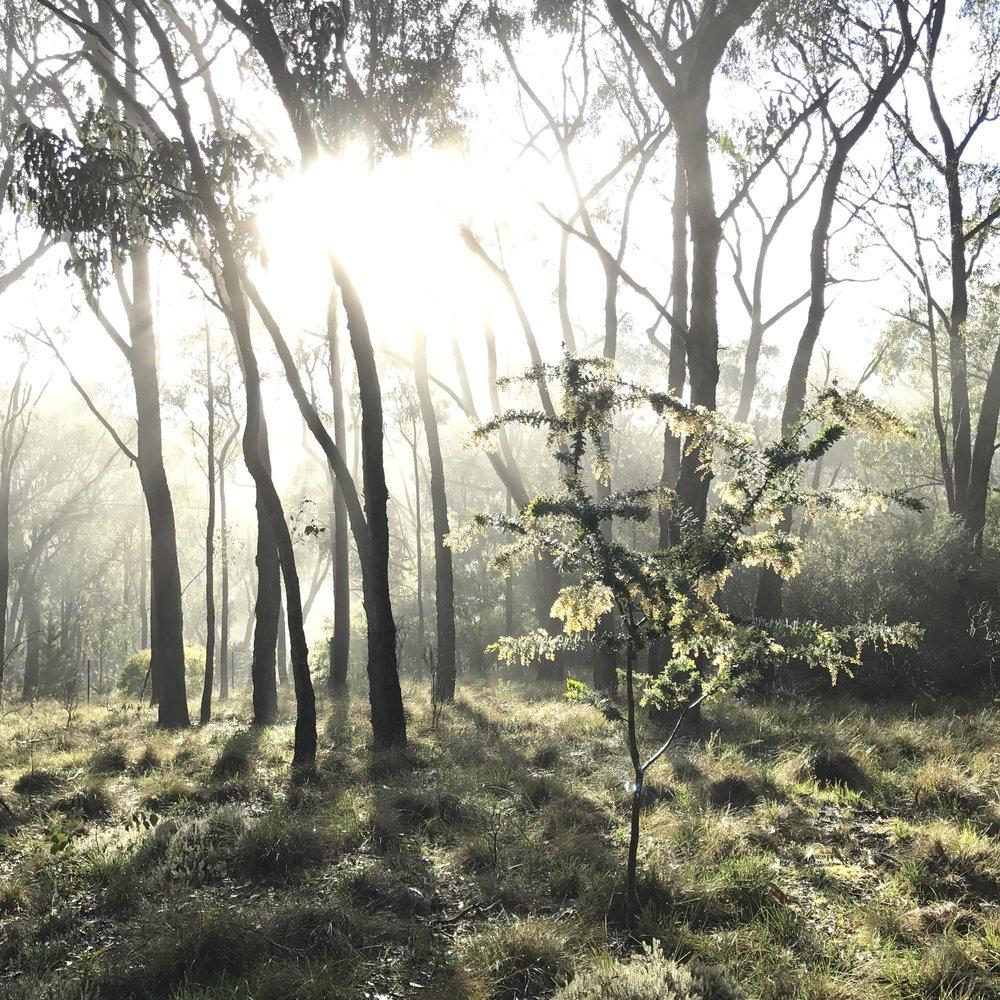 square foggy bush.jpg