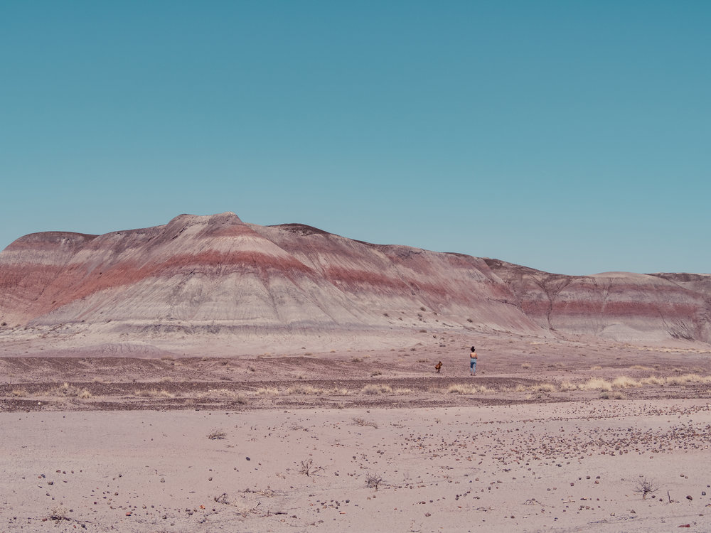 Petrified National Forest -