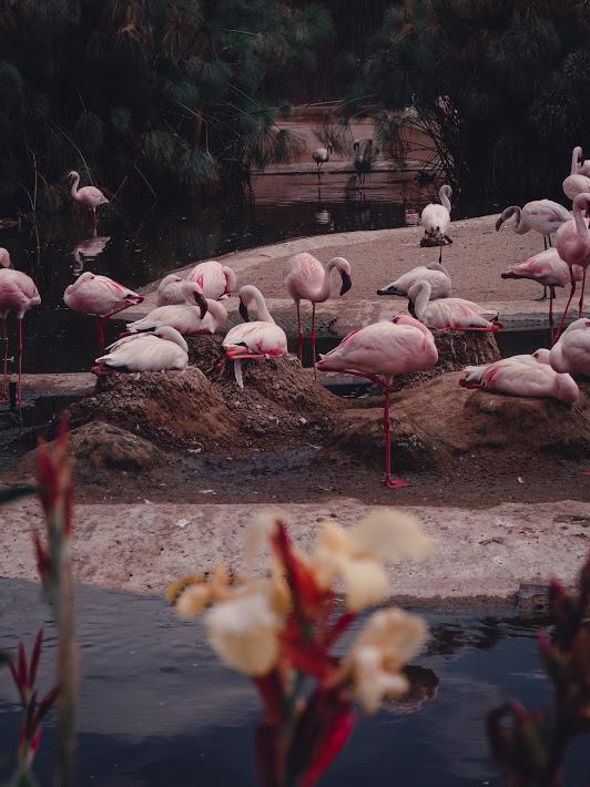 San Diego Safari Park -