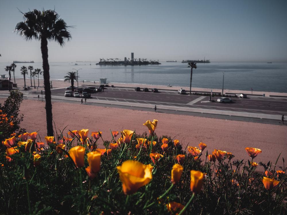 Long Beach - COMING SOON!