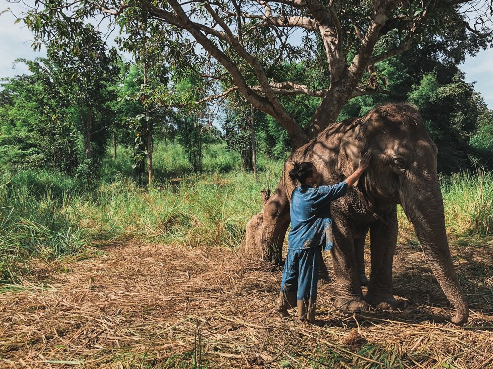 Elephant sanctuaries are not sustainable